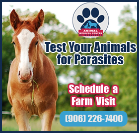 Check Your Pets for Parasites