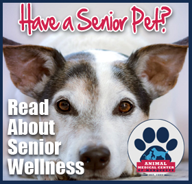 Learn About Senior Pet Wellness